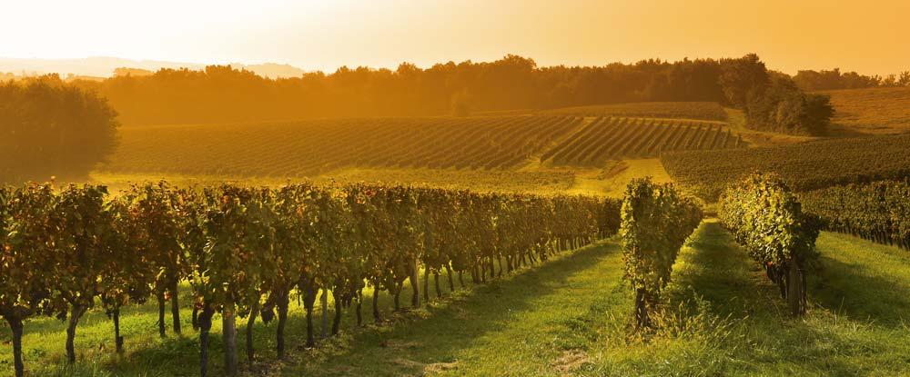 burdeos viñedo