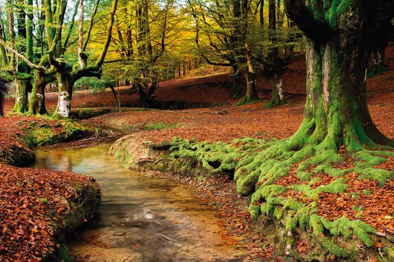 Bosques de Bizkaia